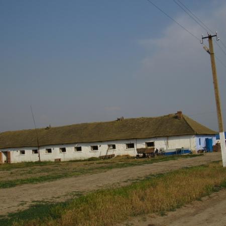 Фермерское хозяйство. Одесская обл., Тарутинский район.